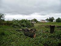 Вырубка деревьев (067) 409 30 70