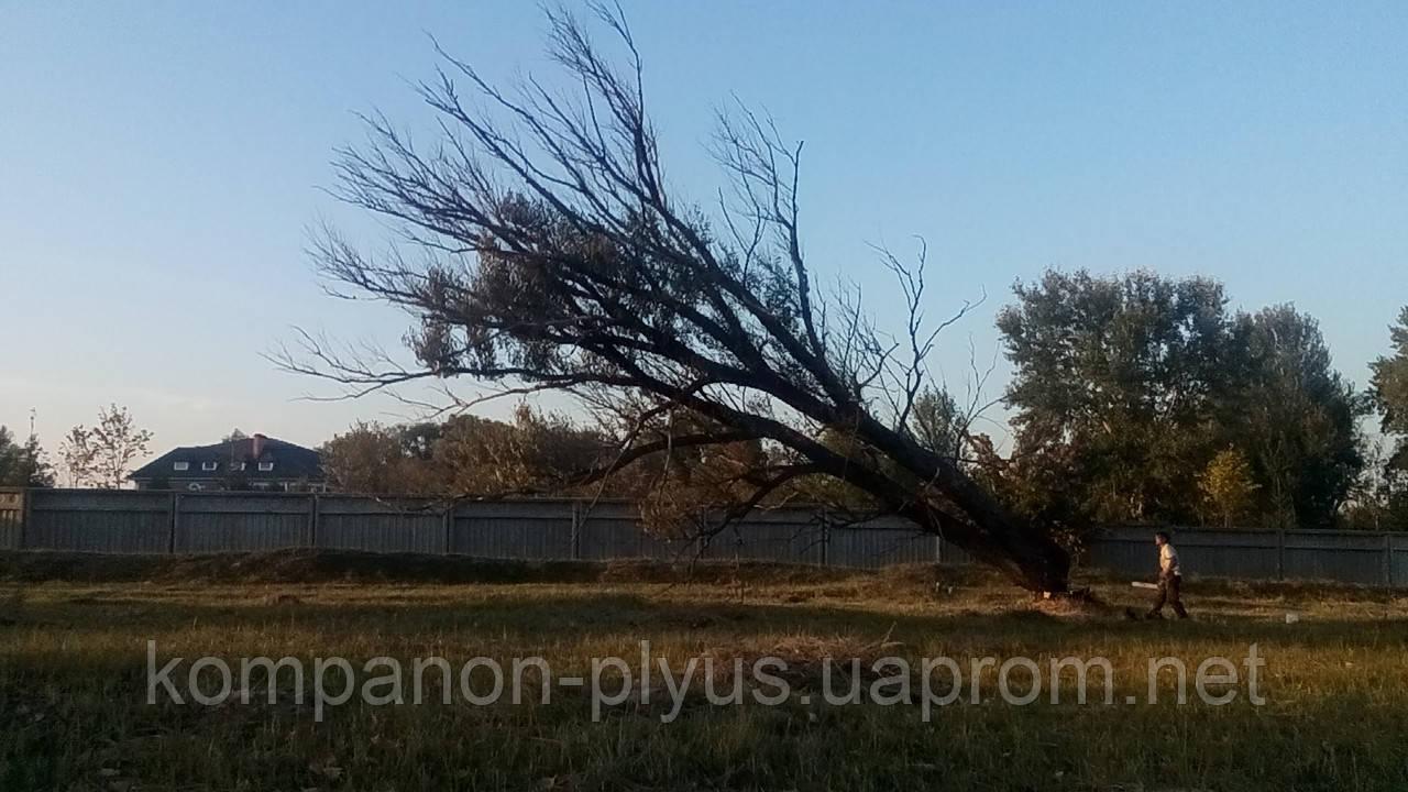 Снос деревьев (067) 232 81 77