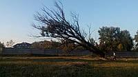 Снос деревьев (067) 232 81 77, фото 1