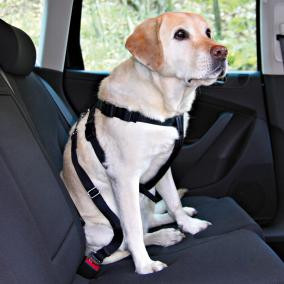 Пояс-шлея безопасности для собак в авто Trixie 70-90 см  (Лабрадор)