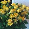 """Саженцы роз """"Санрайз"""" ярко-жёлтая (Санрайс, Восход солнца)"""