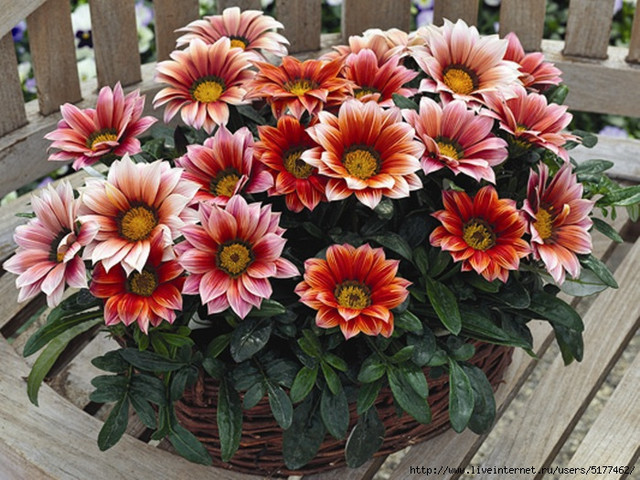 Семена однолетних и двухлетних цветов