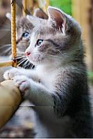 Пленочный обогреватель Трио (Котята)