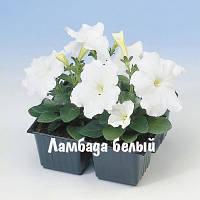 Петуния многоцветковая карликовая Ламбада 1000 шт (цвет в ассортименте)