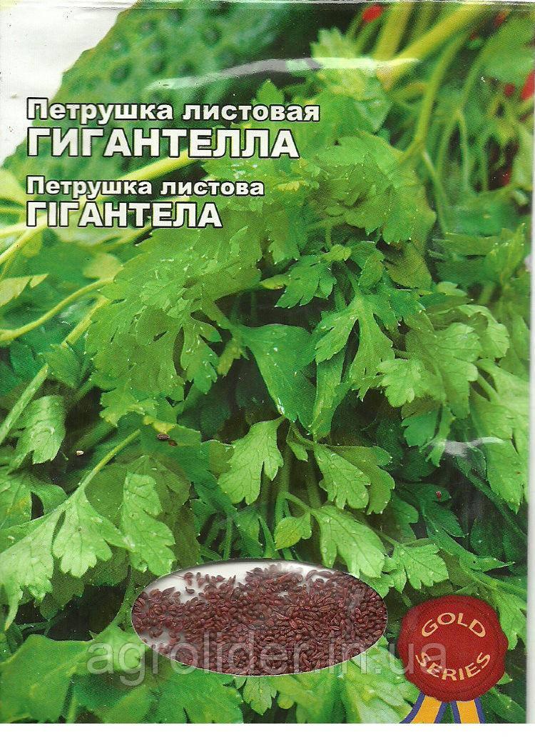Семена петрушка листовая Гигантелла Gold 10г Зеленая (Малахiт Подiлля)