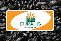 Семена подсолнечника ЕС Поларис F1, Евралис