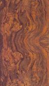 Орех корень Калифорнийский