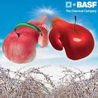 Сигнум ВГ (1кг) - фунгицид для защиты косточковых культур, моркови и лука, картофеля и др.