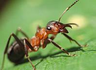 Средства для борьбы с насекомыми