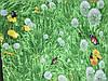 Бязь с одуванчиками на зеленой траве