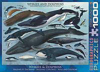 Пазлы Eurographics Киты и дельфины 1000 элементов (6000-0082)