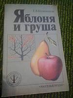 Яблоня и груша Е.Колесников
