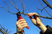 Обрезка плодовых деревьев осенью проводится с целью подготовки растений к зиме.