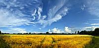 Картина панорамная ПШЕНИЧНОЕ ПОЛЕ