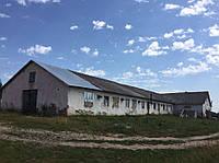 Діюча ферма (с/г підприємство: свиноферма, свинарник, готовий бізнес)