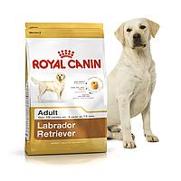 Royal Canin Labrador Retriever Adult 3 кг для взрослых лабрадоров