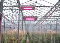 Фитопанель 400W для выращивания растений, лампа для растений (10 полных спектров)