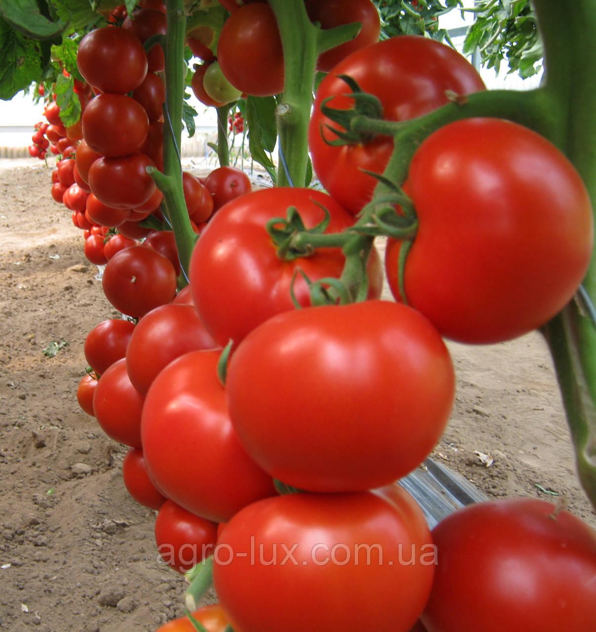 Семена красного томата Чероки F1 250 сем