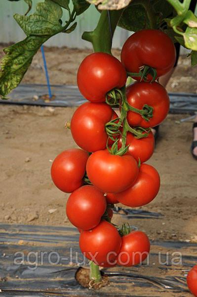 Акция! Семена красного томата Чероки F1 1000 сем