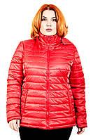 Куртка демисезонная  женская 50-60 р