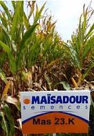 Семена кукурузы Mas 23.K/ Мас 23.К