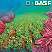 Кинто Дуо КС (10л) - фунгицидный-протравитель для семян зерновых культур