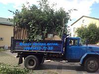 Вывоз веток.Вывоз дерева,веток Киев.