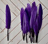 Перо цветное, 13-14 см, 100 шт..  цвет фиолетовый