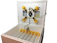 Инкубатор бытовой Теплуша 63 с автоматическим переворотом яиц, фото 1