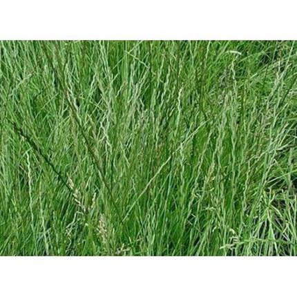 Райграс пастбищный многолетний 1кг, фото 2