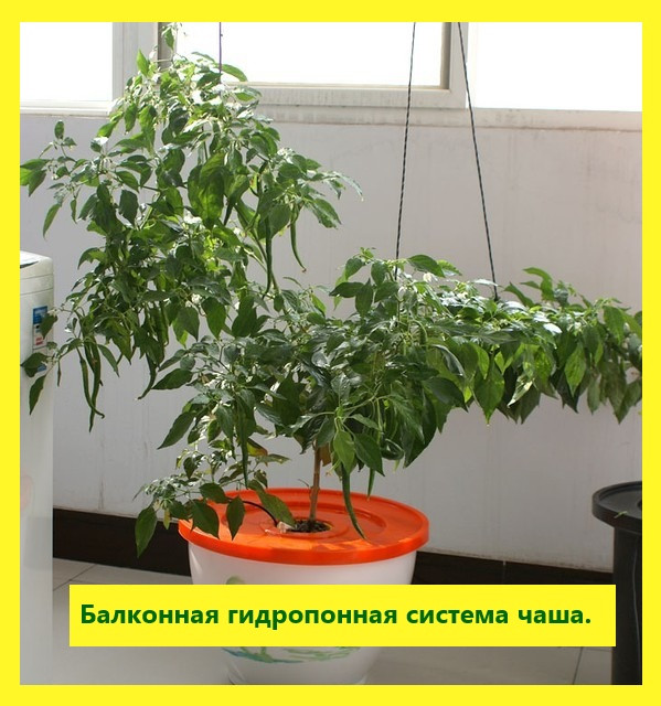 Чаша для гидропонного выращивания - АК-48 в Киеве