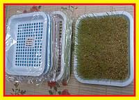 Лотки для гидропонного выращивания рассады.