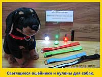 Светящиеся ошейники., фото 1