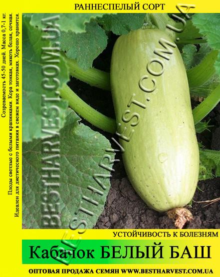 Семена кабачка Белый Баш 10 кг (мешок)