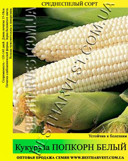 Семена кукурузы «Попкорн Белый» 1 кг