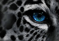 Обложка обкладинка на паспорт тигр глаз