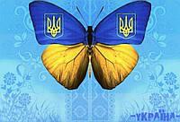 Обложка обкладинка на паспорт Україна метелик