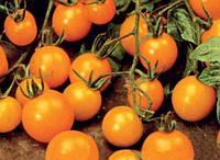 Помидор  черри Оранжевое чудо  15 сем
