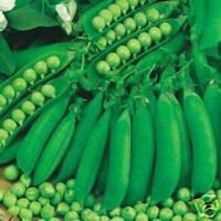 Ранний горох WaveRex Англия 10 семян