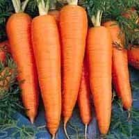 Морковь  St. Valery 100 семян