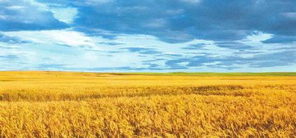Колготки вязаные Украина