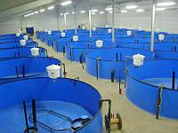 Бассейны для выращивания рыбы