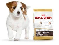 Royal Canin Jack Russell Terrier Junior 1,5 кг для щенков породы джек-рассел-терьер