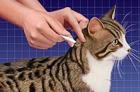 Как вывести блох у кошки - полезные советы