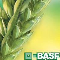 Хлормекват-Хлорид 750 ВР (10л) - регулятор роста для зерновых колосовых культур