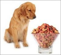 Как перевести собаку на корм