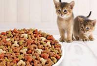 Как приучить кота к корму правильно