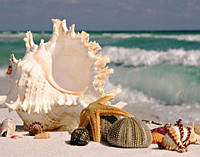 Комплект алмазной вышивки Ракушки у моря DIY 30 х 40 см (арт. FS280) , фото 1