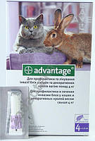 Адвантейдж - капли №1 от блох для кроликов