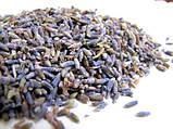 Лаванда цвет ЭКСТРА, 15 грамм. Цветочный чай. Успокаивающее средство. Бессонница, фото 2
